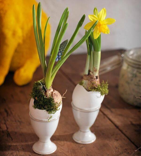 Sätt blomsterlökar i äggskal