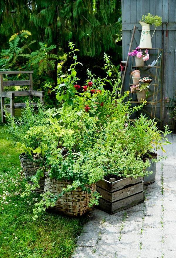 Egen örtagård på nolltid