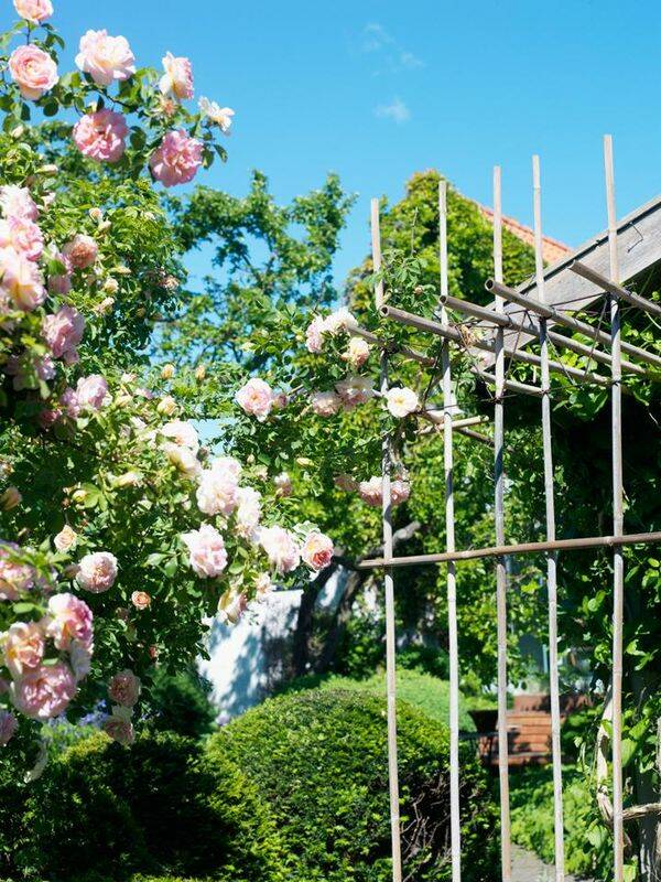 Trädgårdsskolan del 2: Trädgårdens väggar