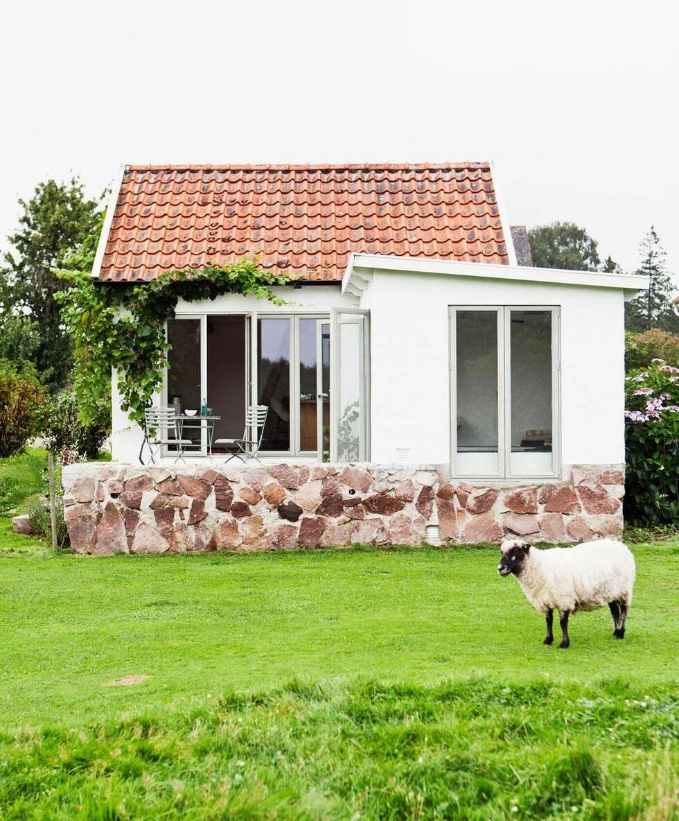 50-talshus omgivet av betande får