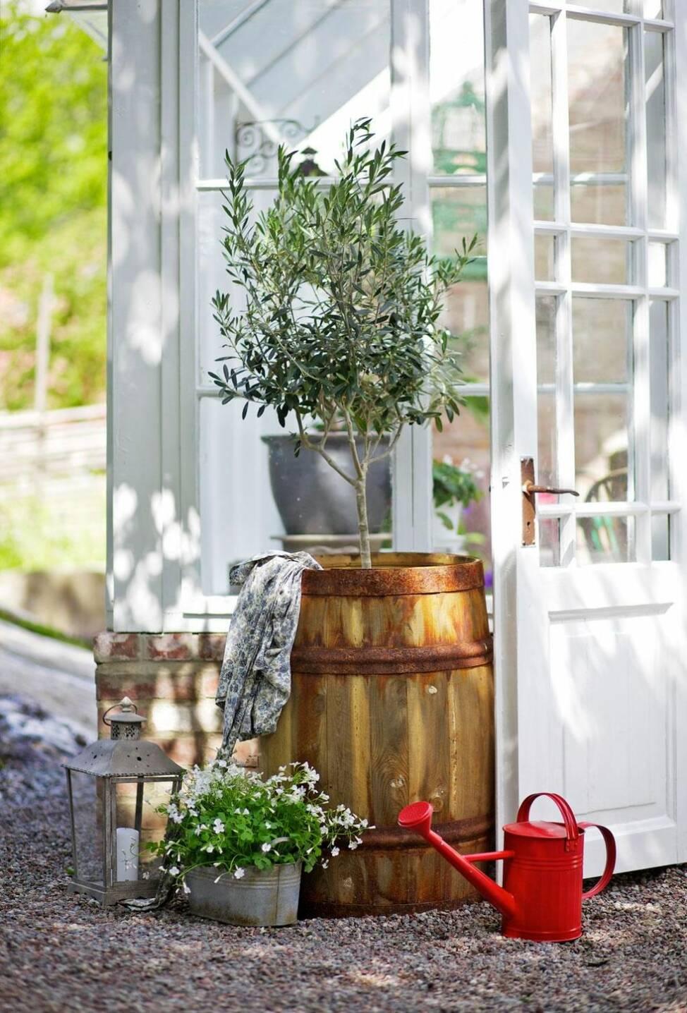 Förläng sommaren i ett växthus
