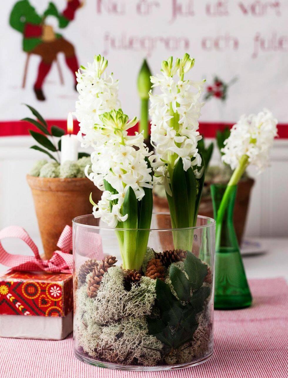 Så här enkelt fixar du julens finaste blomsterarrangemang
