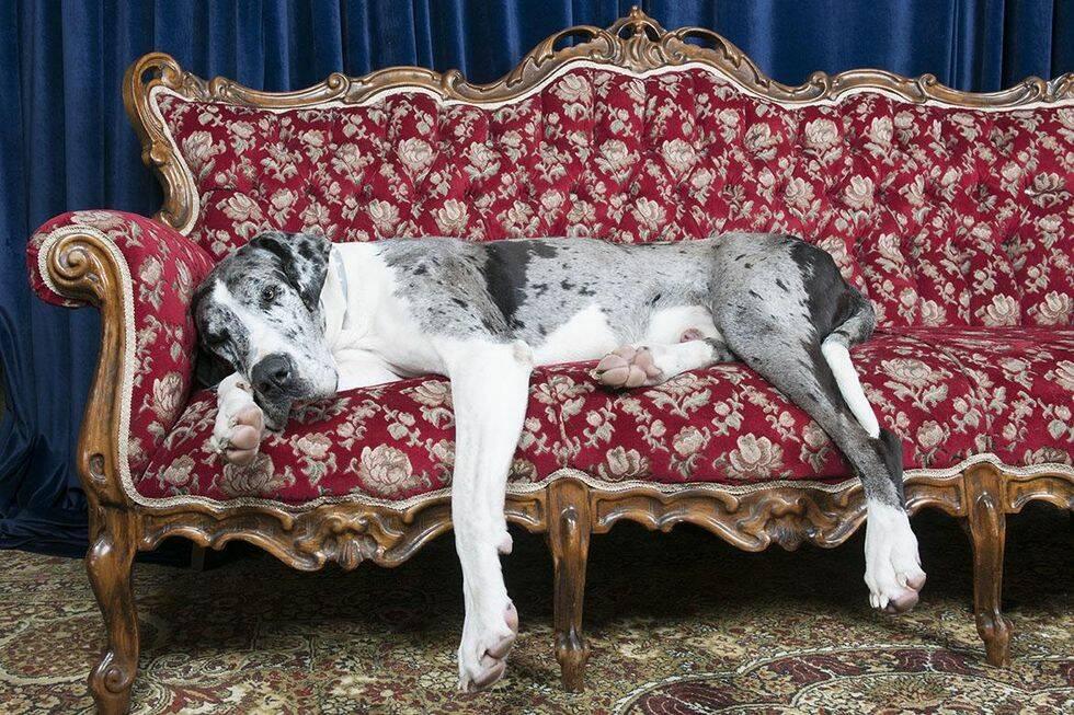 10 urgulliga hundraser som gärna bor på liten yta