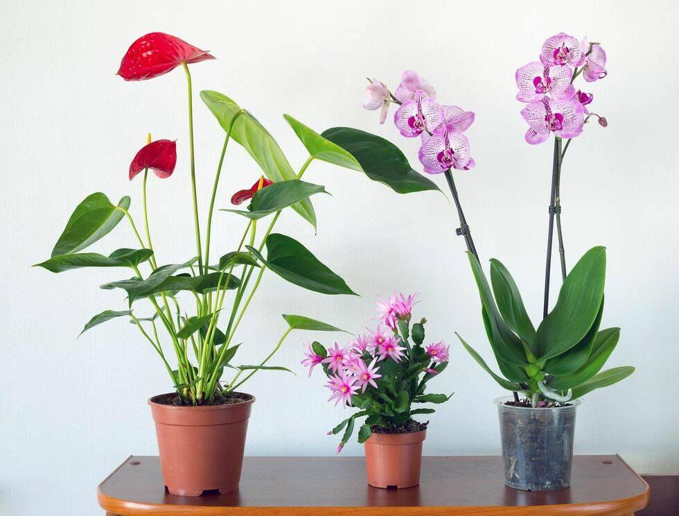 Så här tar du hand om dina krukväxter i vinter