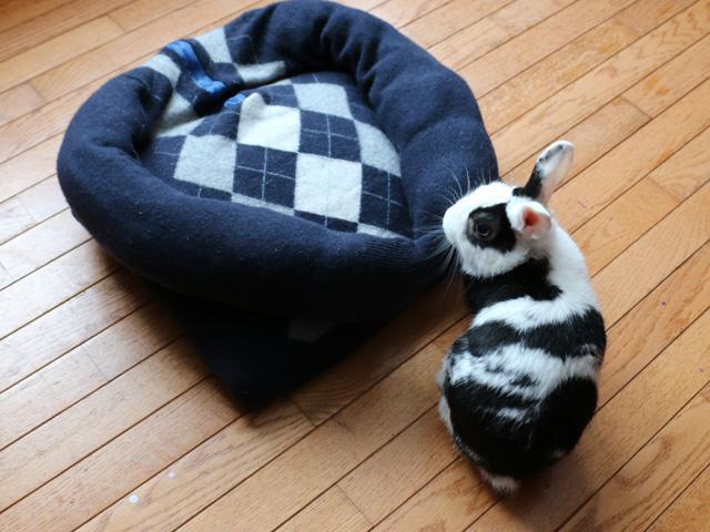 11 mysiga sängar våra husdjur förtjänar – eller hur?