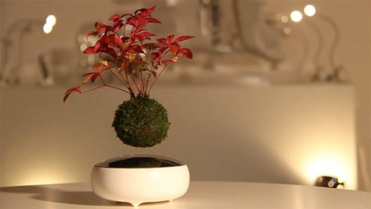 De här svävande bonsaiträden liknar magi