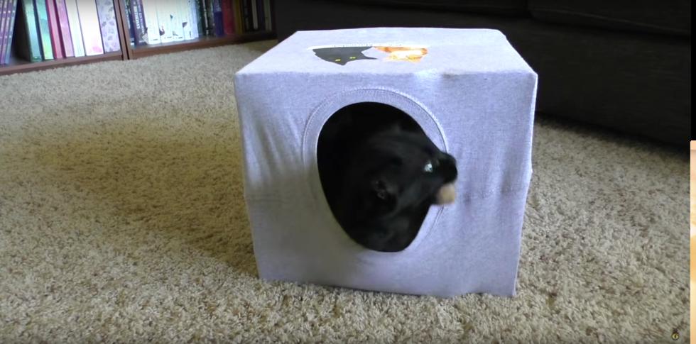 5 smarta hacks alla som har katt borde känna till