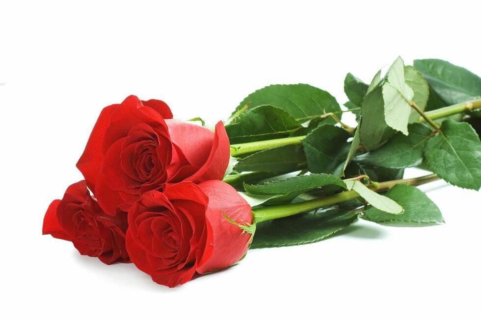 Inför alla hjärtans dag – det här betyder rosorna egentligen