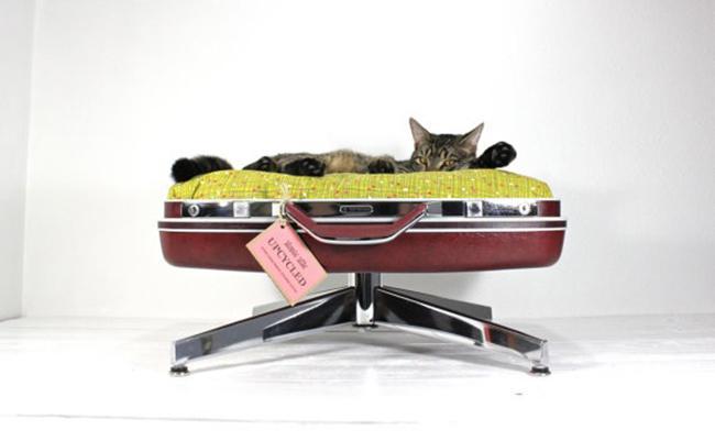 10 möbler alla katter drömmer om