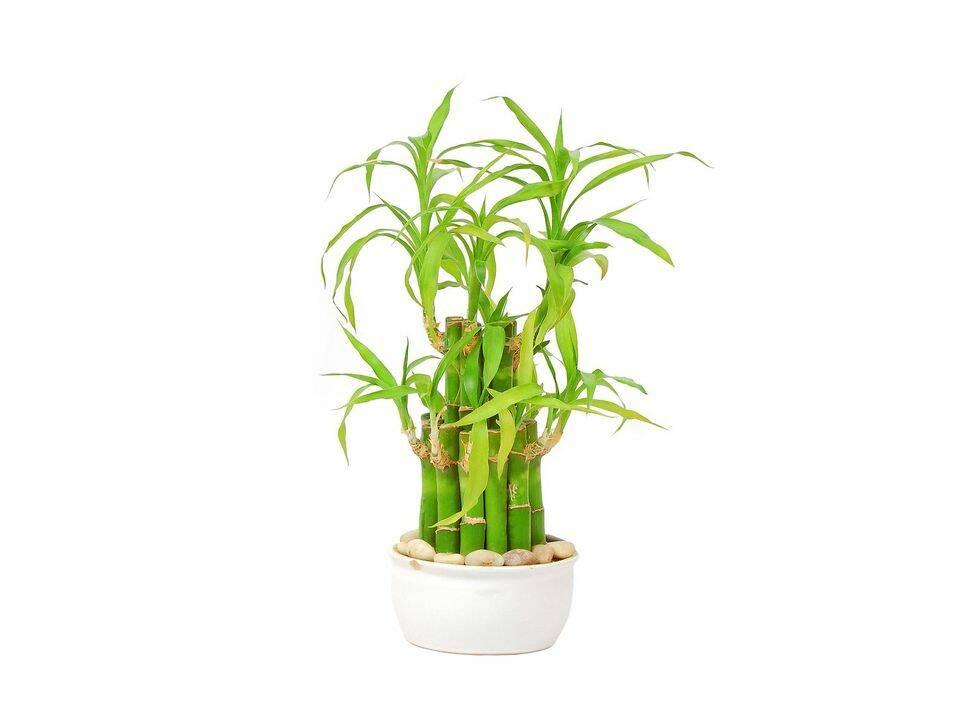 9 växter du kan glömma att vattna med gott samvete