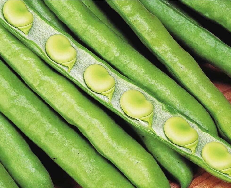 7 härliga nya grönsaker som växer snabbt