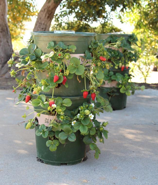 Gör det själv: Jordgubbstorn med inbyggt vattningssystem