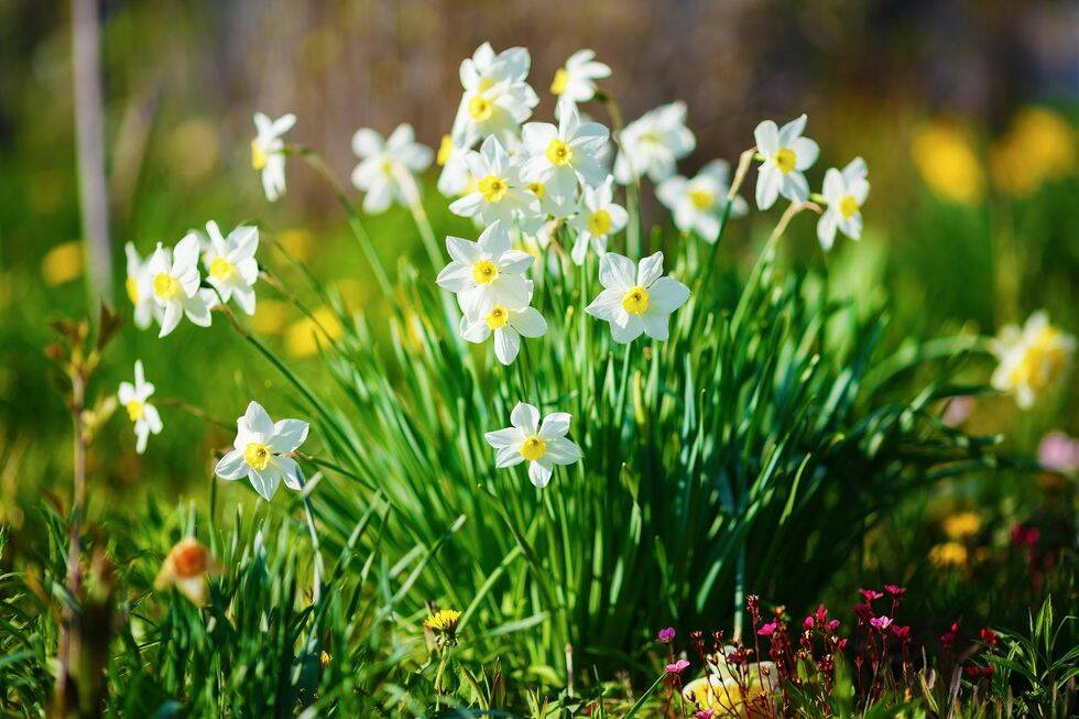 Experten: Så här skyddar du din trädgård mot rådjur