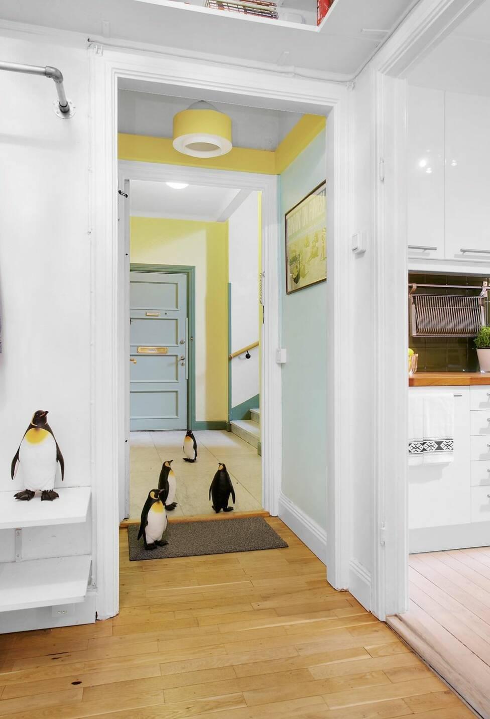 Det finns många bra anledningar till att den här lägenheten är full av pingviner