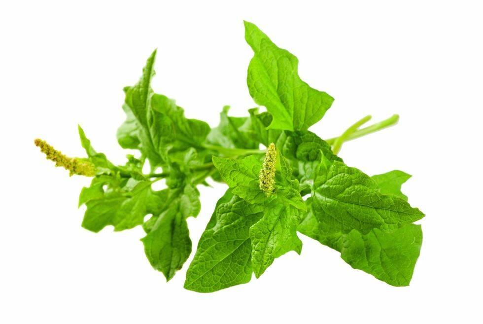 8 grönsaker för den lata odlaren