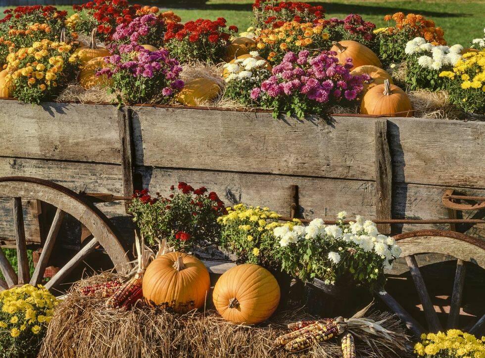 8 misstag du gör när du stylar din trädgård