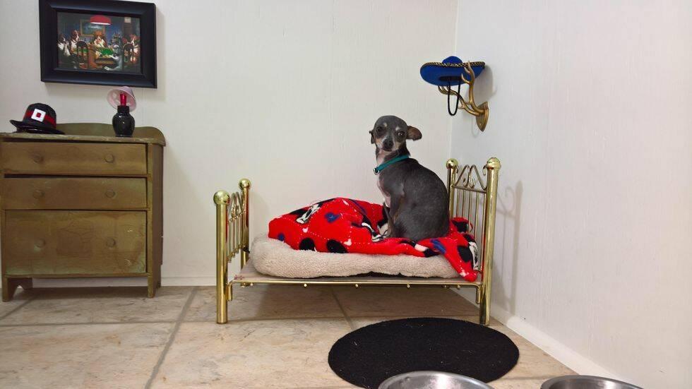 Den här chihuahuan har ett eget litet rum – som Harry Potter