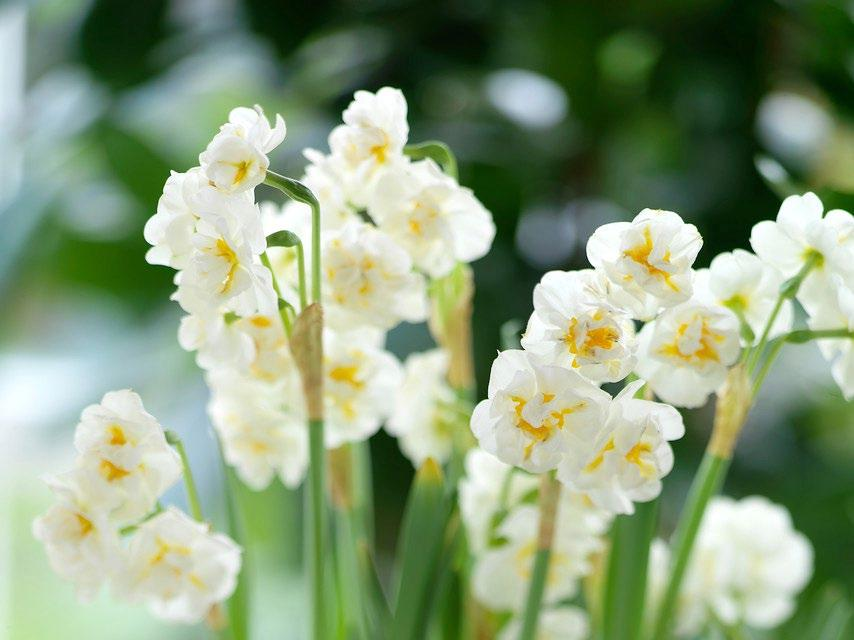 11 saker att göra nu för att förbereda trädgården för vintervilan