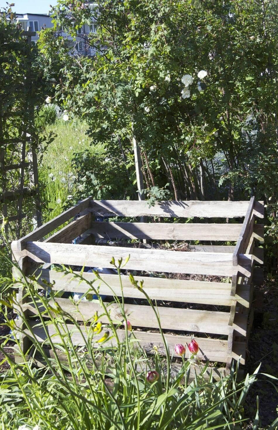 12 tips för hur du odlar ekologiskt i din egen trädgård