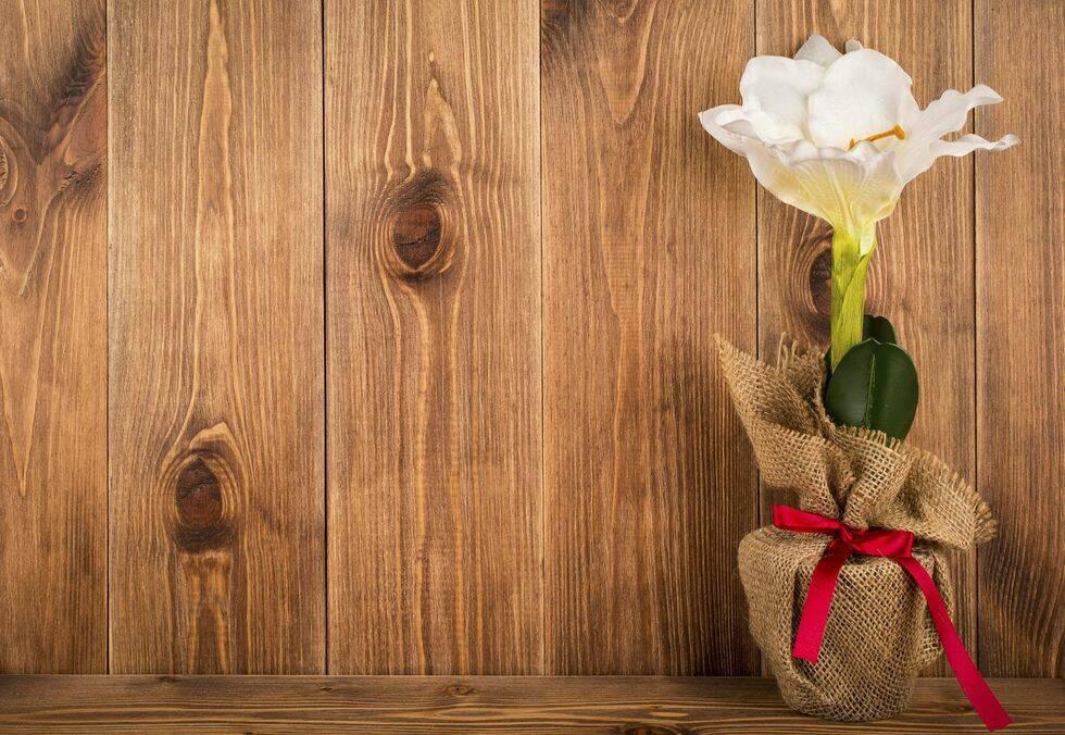 Så här lyckas du med din amaryllis – 9 kloka råd