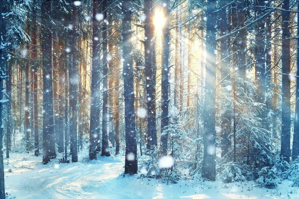 11 bilder som bevisar hur vackert det är med en vit vinter