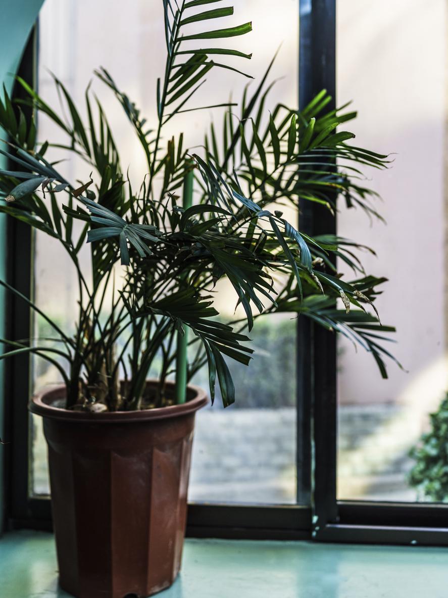 9 gröna växter som överlever även den här mörka vintern