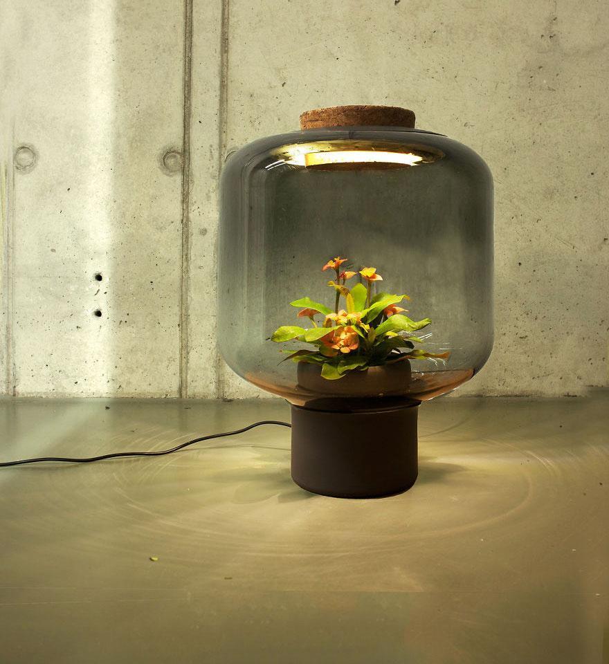 Här är lamporna som fungerar som ett växthus för dina plantor
