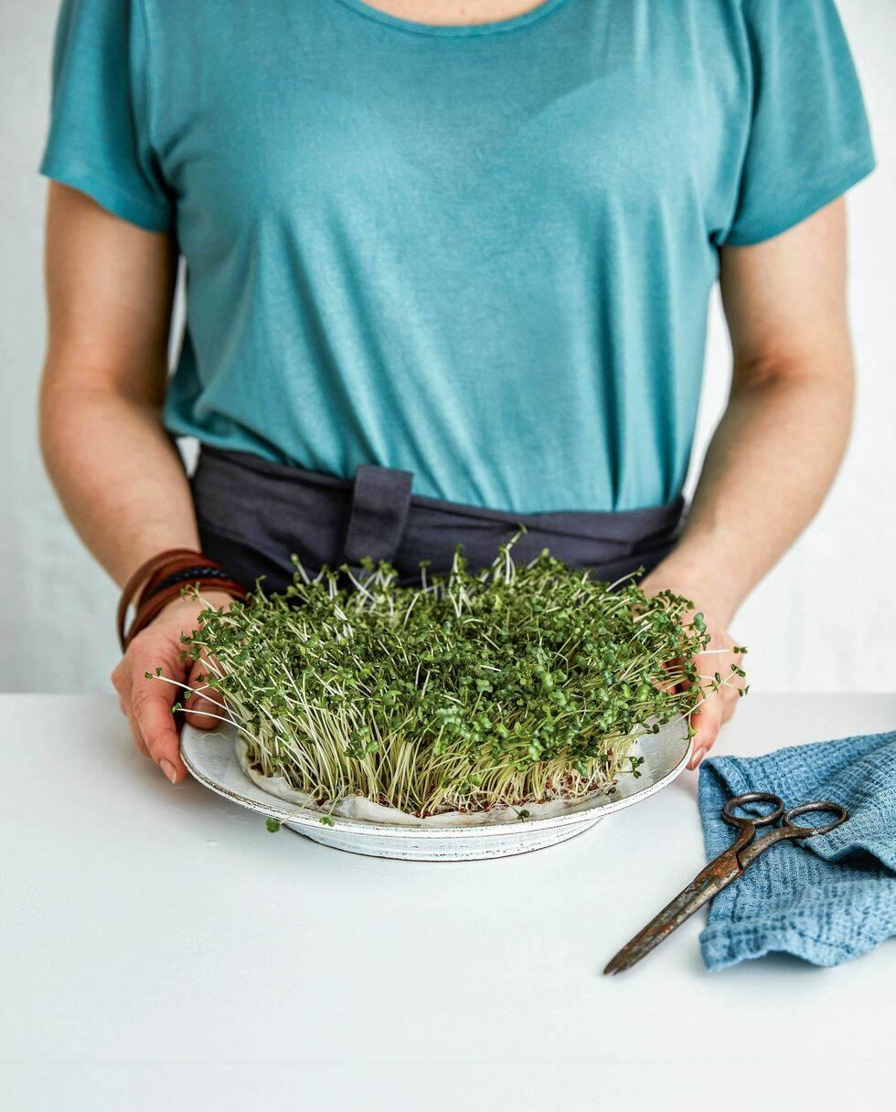 Så här odlar du skott på fönsterbrädan – 5 enkla steg