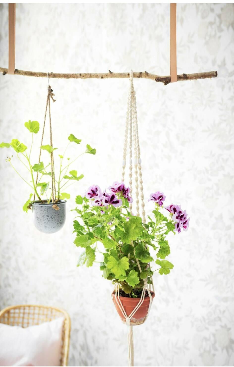 Att inreda med växter är supertrendigt – så här gör du