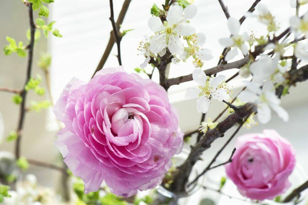 Dekorera med vackra kvistar i väntan på våren
