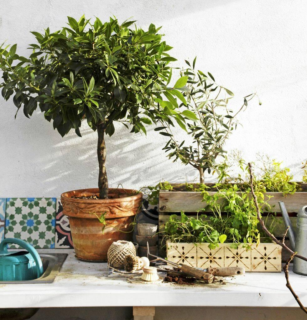 Gör det själv: Mönstrad låda till dina växter